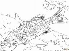 guadalupe bass coloring page free printable coloring pages