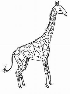 ausmalbild tiere giraffe ausmalbilder1001 de