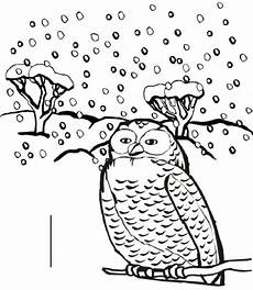 winter animals coloring pages for preschool 17197 winter animals coloring pages coloring pages for owl coloring pages coloring pages
