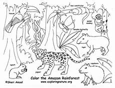 free coloring pages of animals in the rainforest 17397 rainforest color pictures rainforest coloring page exploring nature educational