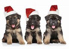 hund mit mütze cards packs quot santa s helpers quot german