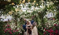 chelsea flower show 2018 chelsea flower show 2018 when is the chelsea flower show uk news express co uk