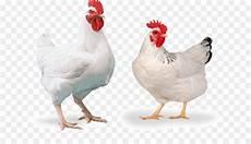 Cornish Ayam Ayam Pedaging Peternakan Unggas Gambar Png