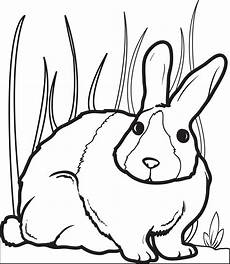 Malvorlage Hase Gratis Free Printable Bunny Rabbit Coloring Page For 2