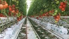 les avantages de la culture hydroponique irrigazette