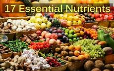 ultimate guide of 17 essential nutrients to your body