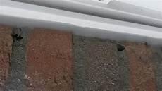 wespen im mauerwerk wespennest eingang zumachen wespen nest