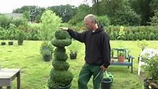 wann buchsbaum schneiden buchsbaum spirale schneiden buxus spiral cut d