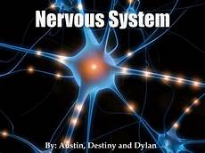 ppt nervous system powerpoint presentation id 2656390