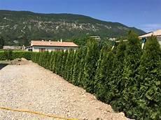 Prix Sapin Pour Haie Thuya Emeraude 100 125 Cm Plantes De Haies Livraison