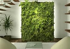 die positive wirkung einer gr 252 nen wand pflanzenfreunde