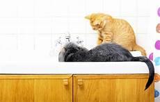 tiere zu hause hund und katze die zusammen im badezimmer