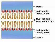cell membrane structure and function at sierra college studyblue