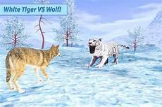 Populer Gambar Harimau Marah Goodgambar