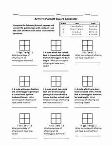 punnett square generator worksheet by haney science