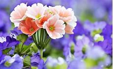Bunga Cantik Untuk Taman Ideku Unik