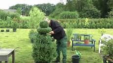 buchsbaum buxus boxwood neu gestalten re style