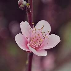 Bunga Juga Tumbuh Di Turki Sustainable Hopes