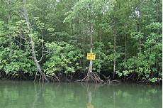File Hutan Simpan Kisap Jpg Wikimedia Commons