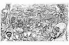 Ausmalbilder Urwald Kostenlos Jungle Forest Animals Jungle Forest Coloring Pages