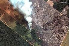 Hutan Terbakar Paru Paru Dunia Yang Kini Terancam