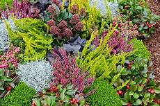 kübelpflanzen winterhart blühend winterharte k 252 belpflanzen pflanzen breuer