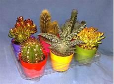 vasi in plastica colorati cactus center sanremo