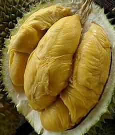 Kumpulan Gambar Durian Aceh Hd Gratis Infobaru