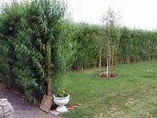 Alternative Zu Zaun Und Hecke Ogr 243 D Sichtschutz Garten