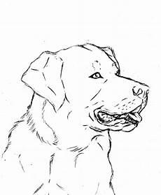 labrador coloring page at getdrawings free