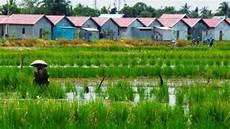 Bagaimana Keadaan Pertanian Indonesia Saat Ini
