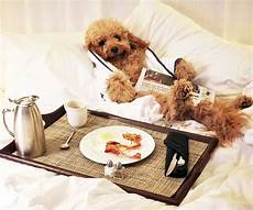 are hotels pet friendly northern california pup adventure worth barking about animal fair