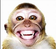 Kumpulan Gambar Monyet Lucu Toko Pintu Rejeki