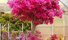 piante fiorite perenni catalogo piante perenni da fiore planeta srl