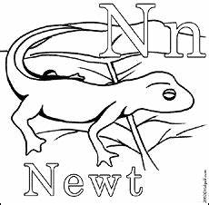 animal coloring pages for 1st grade 17301 coloring pages animals newt animal coloring pages coloring pages abc illustration