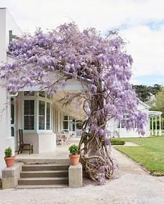 Rankhilfen Für Kletterpflanzen - rankhilfe f 252 r blauregen kletterpflanze haus fassade
