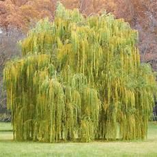 arbre a pousse rapide plantes 224 croissance rapide ooreka