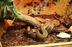 serpenti da tenere in casa come tenere un rettile in casa io e il mio animale
