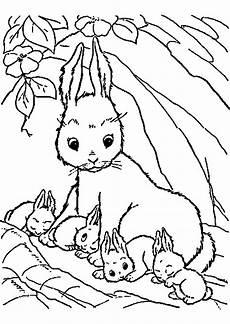Ausmalbilder Hasen Baby Ausmalbild Meerschweinchen Kinderbilder