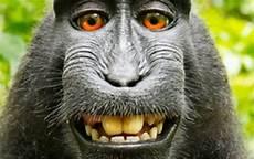 Monyet Berhijab Rahman Gambar