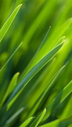 grass flower wallpaper iphone grass plants macro iphone wallpaper iphoneswallpapers com