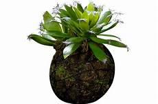 Plantes Artificielle Suspension Succulente Longue Feuille