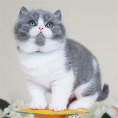 Foto Kucing Lucu Untuk Profil Wa