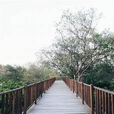 Wisata Alam Hutan Mangrove Wonorejo Si Hijau Penyelamat