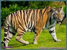 1000 Images About Nama Binatang On