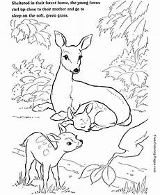 animal coloring pages deer coloring page