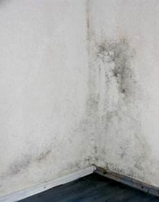 Schimmel Ecke Außenwand - schwarzer schimmel an der wand extrahierger 228 t f 252 r