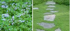 plante tapissante ombre fleur de