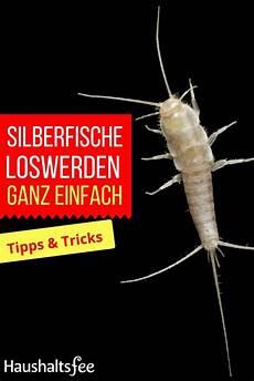 silberfische bek 228 mpfen beste tipps tricks tipps
