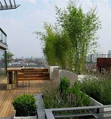 Bambus Pflanzen Dachterrasse Sichtschutz Sichern A